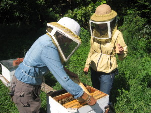 Cover photo for Honeybees and Agriculture