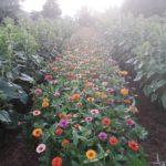 flower trials