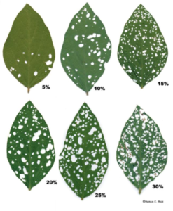 Image of soybean damage chart