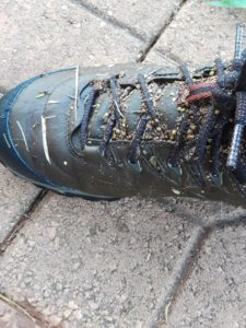 Weed seeds on boots