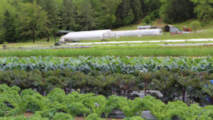 Picture of a small farm where different types of kale and greens are growing in early spring