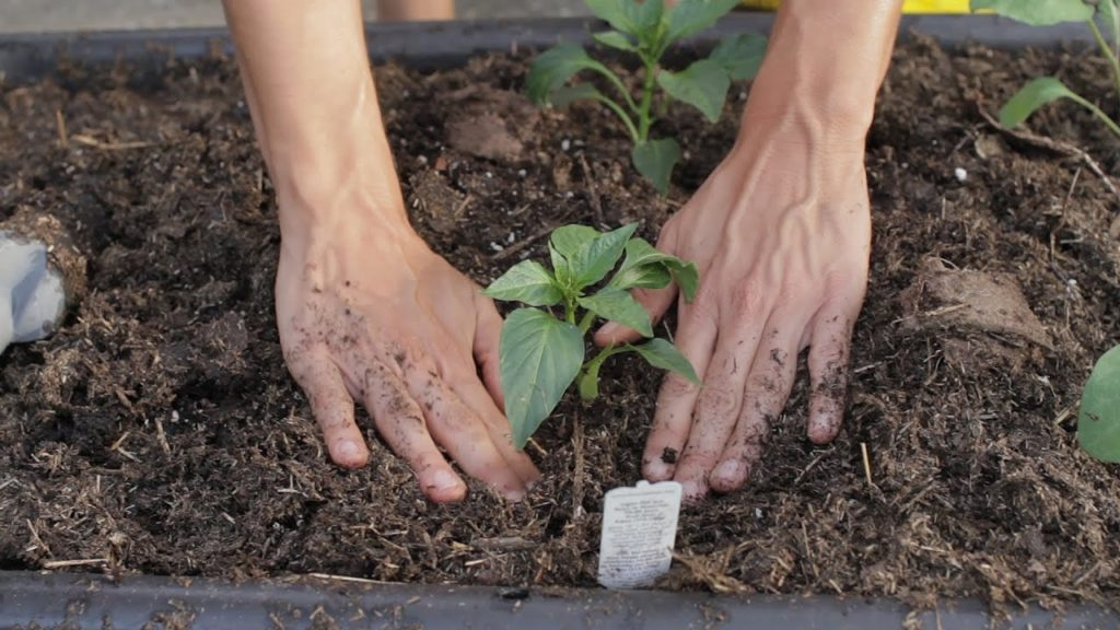 Image of person planting a plant