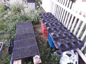 Get seedlings going in trays or cup holders.